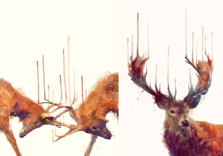 """Illustrations """"Stags//Strong"""" and """"Red Deer//Stag"""" by Amy Hamilton"""