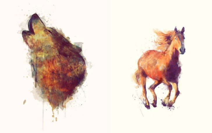 Wolf & Horse // Boundless by Amy Hamilton