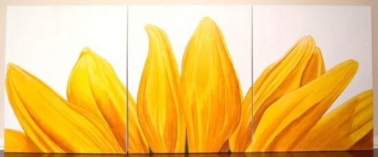 sunflower rising