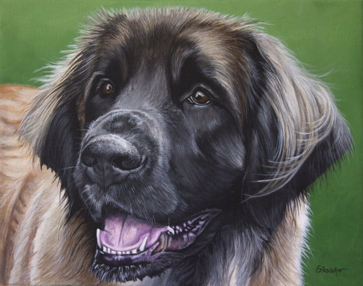 A pet portrait of a Leonberger dog by Erica Eriksdotter