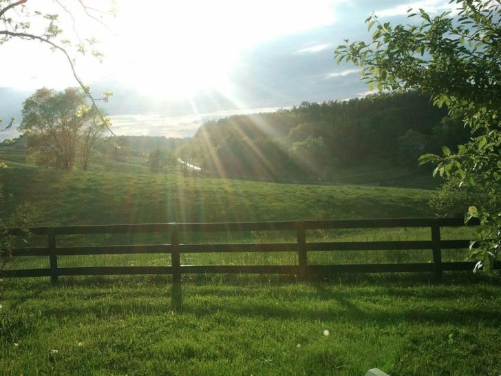 The view from Intra-Dimensional Healer, Cherie Hickman's backyard