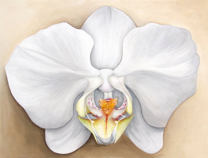 Lara's Orchid - original front
