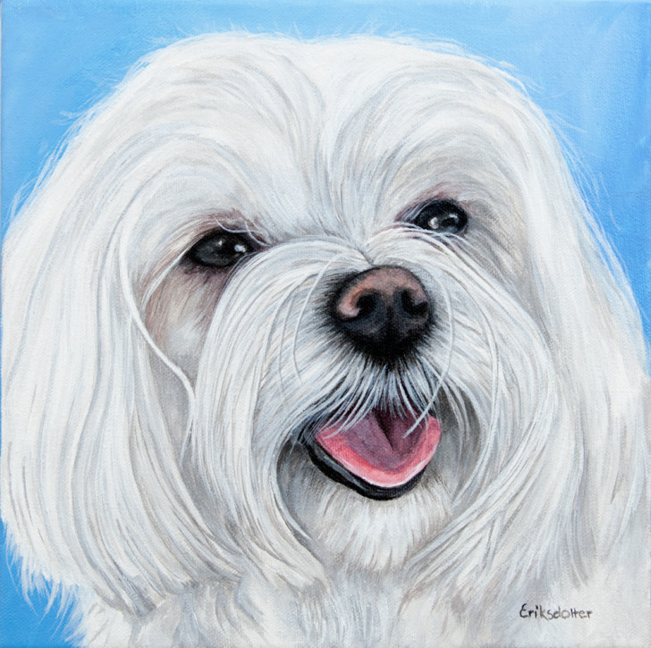 Lucy, the Maltese - original pet portrait by Erica Eriksdotter, front