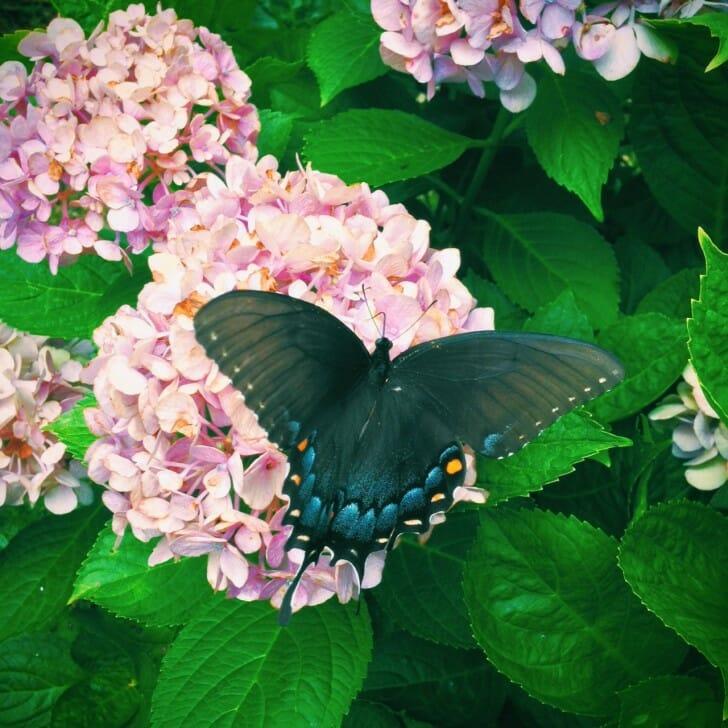 Butterfly July 2013