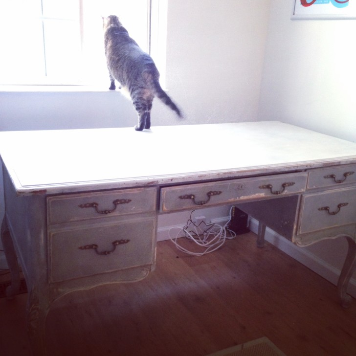 Lola taking one last stand on the desk
