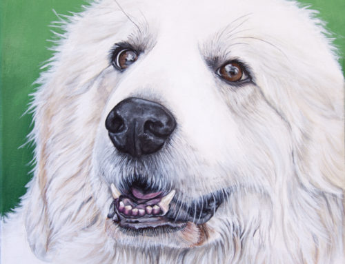 Sugar Bear's Pet Portrait