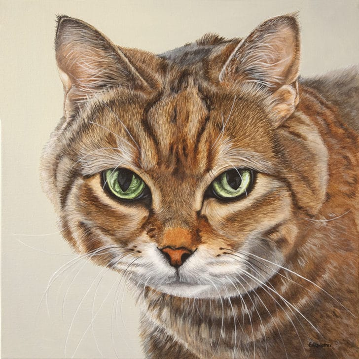 A pet portrait of a tabby cat by Erica Eriksdotter