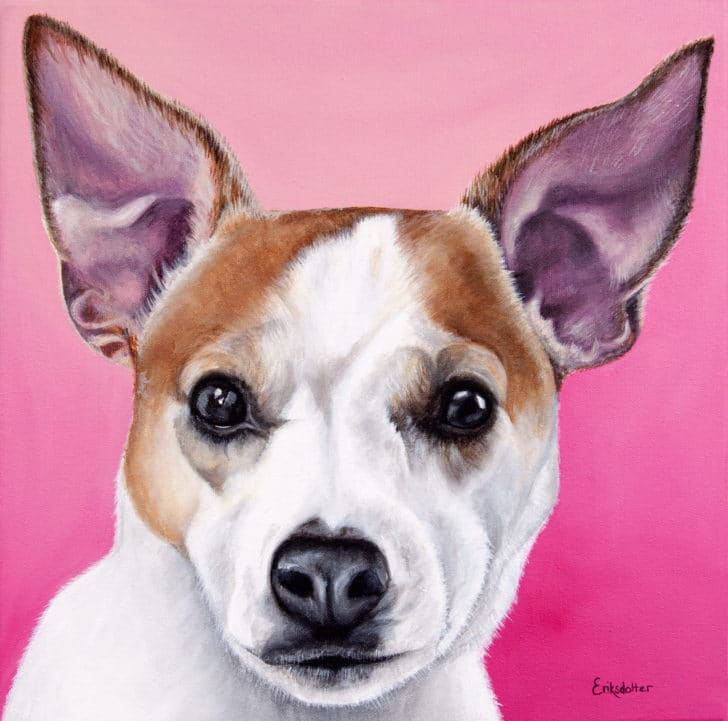 Custom dog portrait of Olive, a jack russell and chihuahua dog by fine arts painter Erica Eriksdotter, close up