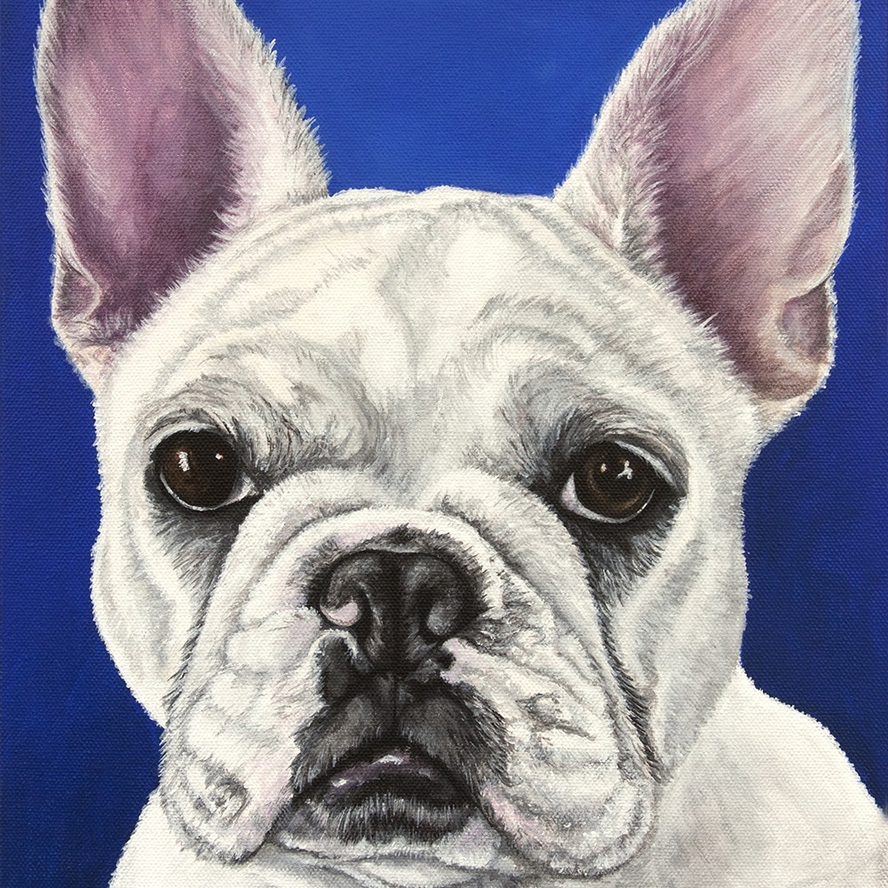 Custom french bulldog portrait by Erica Eriksdotter, close up