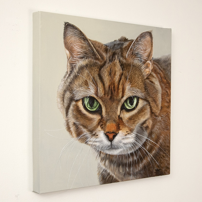 Macbeth's original pet portrait brown tabby on beige background