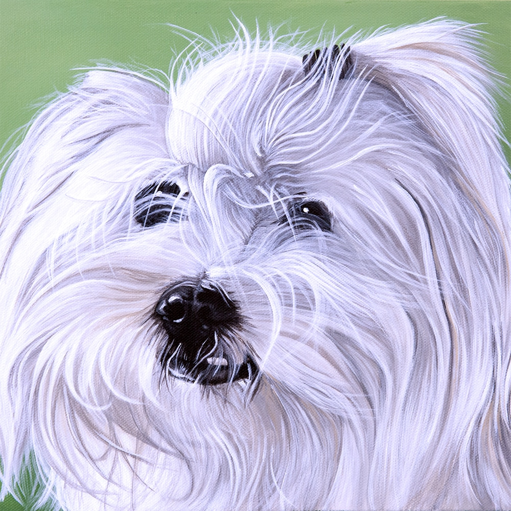 Custom dog portrait and pet memorial of a lhasa apso dog by fine arts painter Erica Eriksdotter, close up