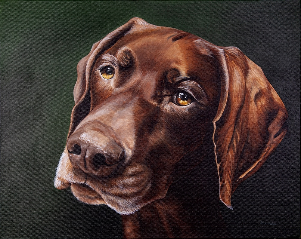 Custom dog portrait of a german shorthair pointer by artist Erica Eriksdotter